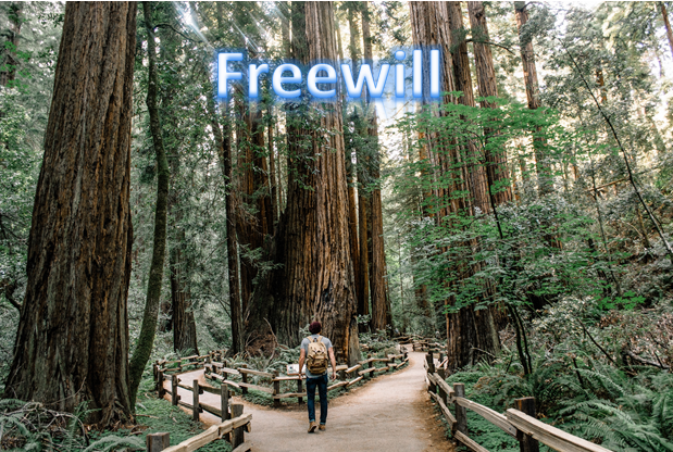 freewill what path will you take